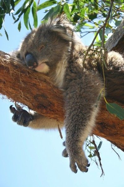 See Australian Animals and Wildlife in Australian Capital Territory