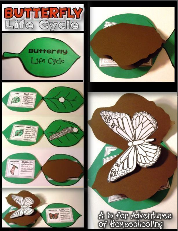 Butterfly Life Cycle Activities!