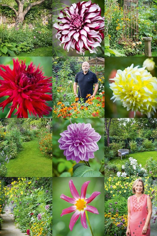 CLOCKWISE+FROM+TOP+LEFT+An+old+pear+tree,+surrounded+by+dahlias,+geraniums,+daylilies+and+inula.+Dahlia+'Tartan'.+A+sundial+and+a+plant+support+of+woven+willow+and+hazel,+backed+by+yellow+heleniums.+Dahlia+'Grand+Prix'.+A+bench+in+a+quiet+spot+of+the+lawn.+Jo+Thompson.+Dahlia+'Honka+Pink'.+The+path+runs+the+length+of+the+garden.The+lawn+narrows+toward+the+back,+circling+around+an+island+bed.+Dahlia+'Apache'.CENTER+FROM+TOP+Sam+McKnight+(centre).Dahlia+'Worton+Blue+Stre...