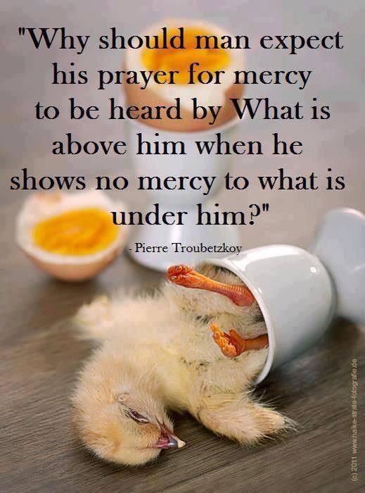 """show #compassion show mercy go #vegan """"why should man expect his prayer for mercy to be heard by what is above him when he shows no mercy to what is under him?"""""""