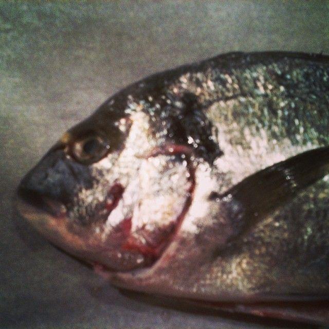 Finalmente è venerdì! #orata #seafood #cena #pesce #food #picoftheday #photooftheday