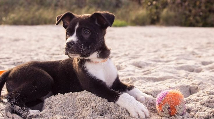 The UK government is considering a new law which would enforce the 'adopt don't shop' movement - pet shops would be banned from selling puppies.