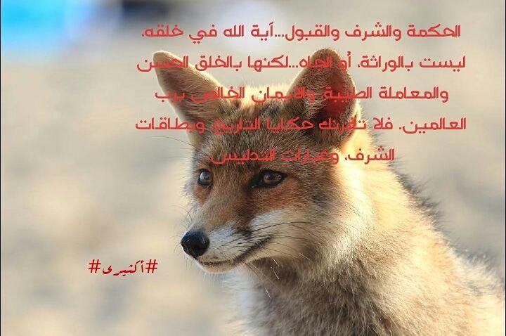 Pin By Aktiri Aktiri On مقولات أكثيري Animals Fox Loll