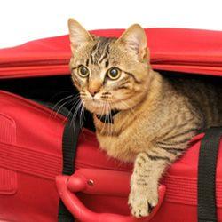 10 Essential Cat Travel Accessories: Animal Planet