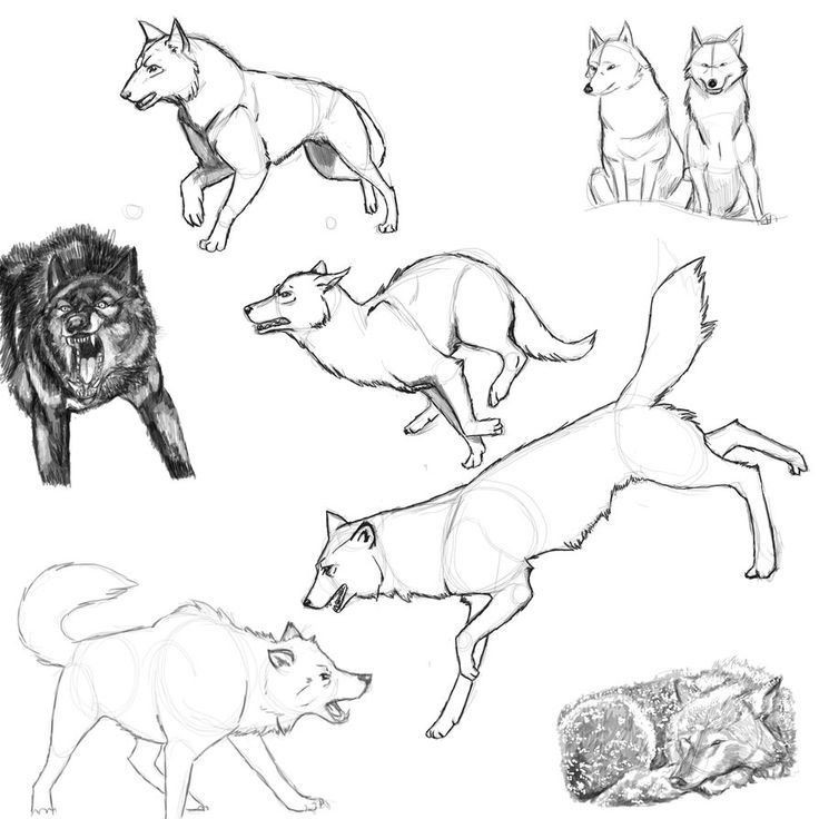 wolf front poses - 894×894