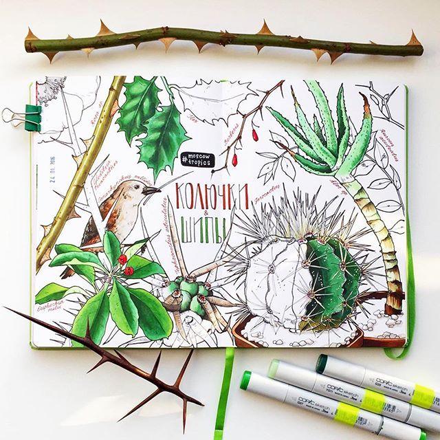 """Ботанические рисовашки в #moscowtropics, тема """"Шипы и колючки"""" (а также - что делать, если клюв у вас коротковат, а кушать хочется)  #фондоваяоранжерея_МК #ботаническийрисунок_ФО #v0lha_sketch"""