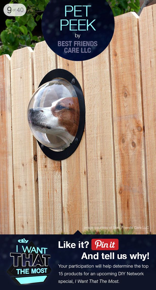 Pet Peek: Tall Stuff, Cat Ideas, Cute Dogs Stuff, Dogs Ideas, Picket Fence, Pet Stuff, Boo Window, Cool Ideas, Dogs Fence