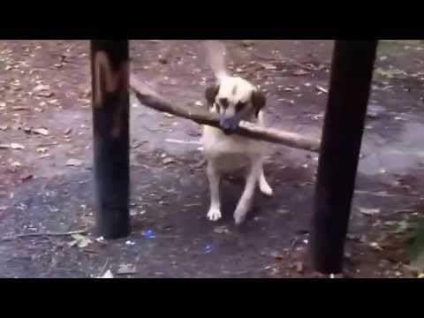 Roliga Katter 2015 / Roliga Djur//Funny Dogs   A Funny Dog Videos Compilation 2015 -  #dog #dogs #funnydogs #puppy #doglover #animals #animal #pet #cute #pets #animales #tagsforlikes Roliga djur. Roliga Katter Roliga djur på video – alla de roligaste Roliga filmer med djur – Sammanställning. Roliga husdjur Roliga djur, Katter. Roliga video Roliga katter på video &#... - #Dogs