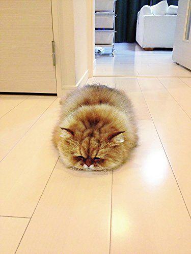 しょんぼり顔のモフモフ猫 ふーちゃんやけども。