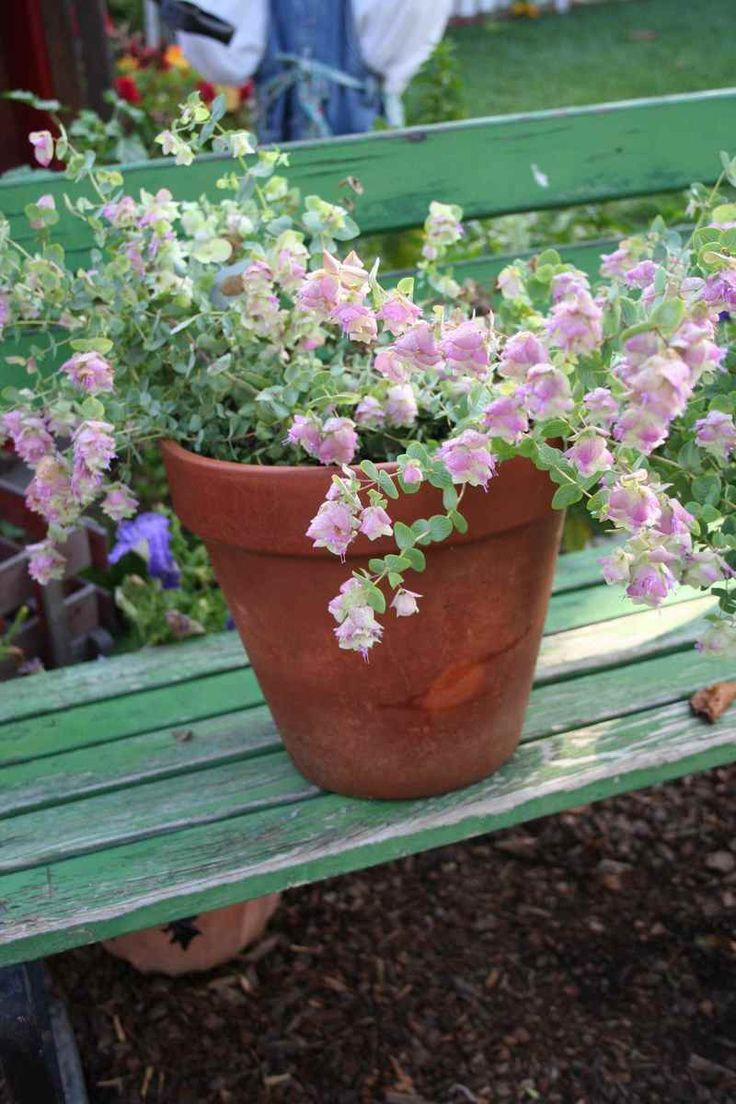 Hanging Flower Baskets In Full Sun : Best hanging baskets full sun images on