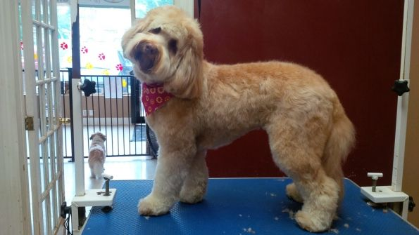 Head To Tail Dog Grooming  Dog groomers in Barrie, Ontario