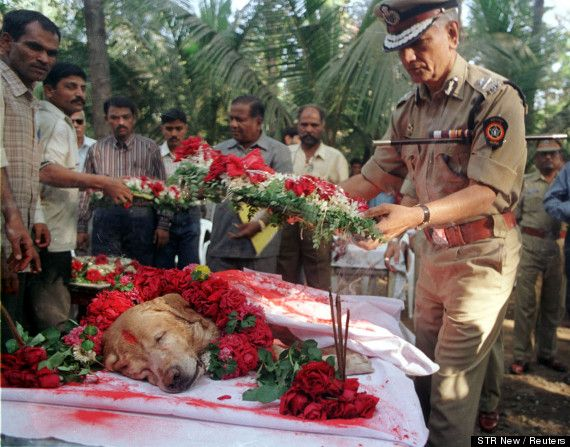 Zanjeer the Yellow Labrador who saved 1000's of lives in mumbai- given a heroes funeral.