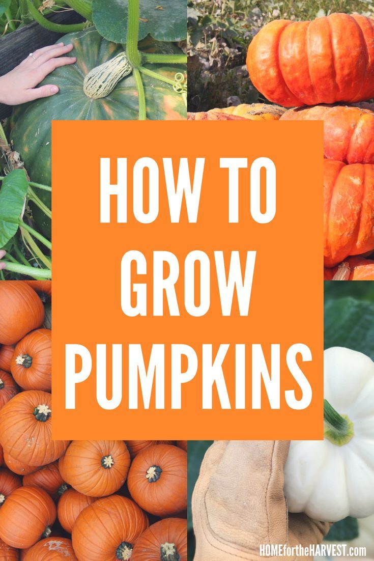 161 best fall gardening images on pinterest veggie gardens