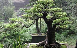Η ΛΙΣΤΑ ΜΟΥ: Μπονσάι: η ιαπωνική τέχνη που μαγεύει