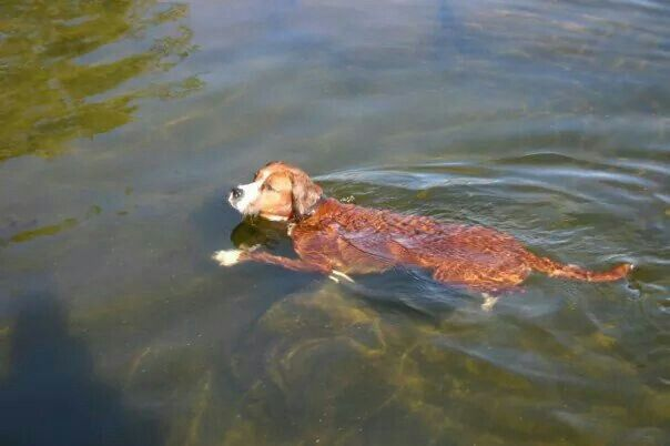 Just keep swimming, just keep swimming... lalalalaaa