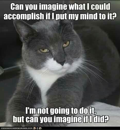 Mind Blown Cat Meme