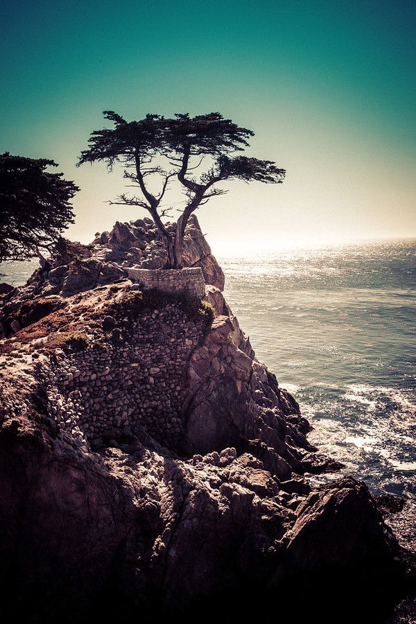 """This is kind of a famous tree, I think. Well, I guess it's famous if you've heard of it, otherwise it's completely unknown. It's one of those things you find out is famous, and then every time you see it, you think, """"Oh that is the famous tree."""" - California - Photo from #treyratcliff Trey Ratcliff at http://www.StuckInCustoms.com"""