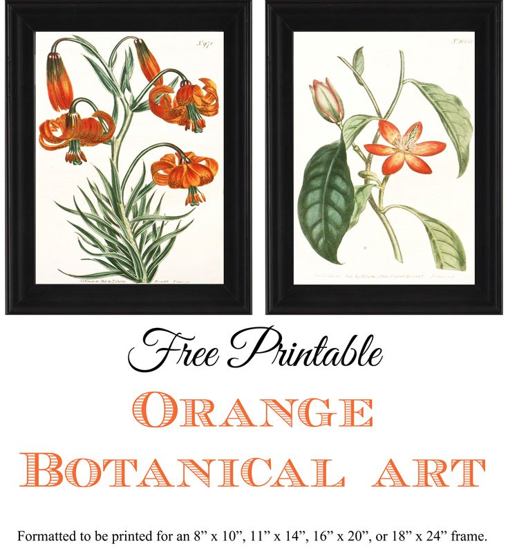 free printable orange botanical art formatted to be print for an 8 x 10
