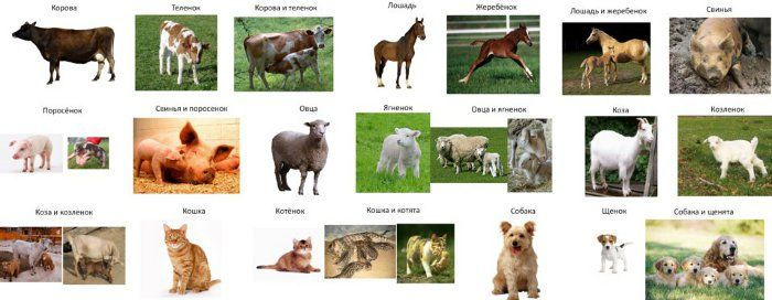 Zvieracie rodiny