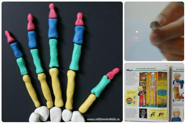 #анатомия_для_детей #занятия_с_детьми #дети  Скелет человека это второе занятие для детей дошкольного и младшего школьного возраста. В игровой форме узнаем о костях, их количестве, функциях, прочности.