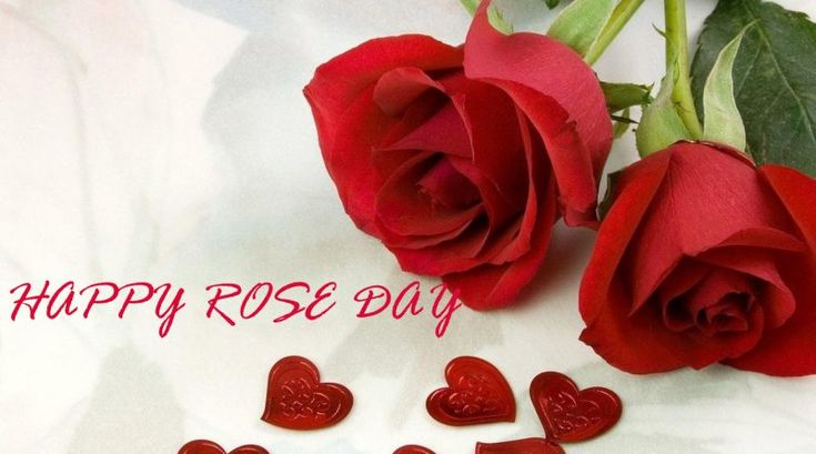 Rose Day Text 2018 In 140 Words For GF | Bf | Lover