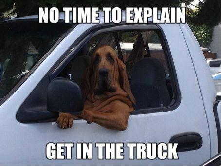 Funny dog! https://itunes.apple.com/gb/app/puzzler-world/id734369589?mt=8 https://play.google.com/store/apps/details?id=com.puzzlermedia.pws