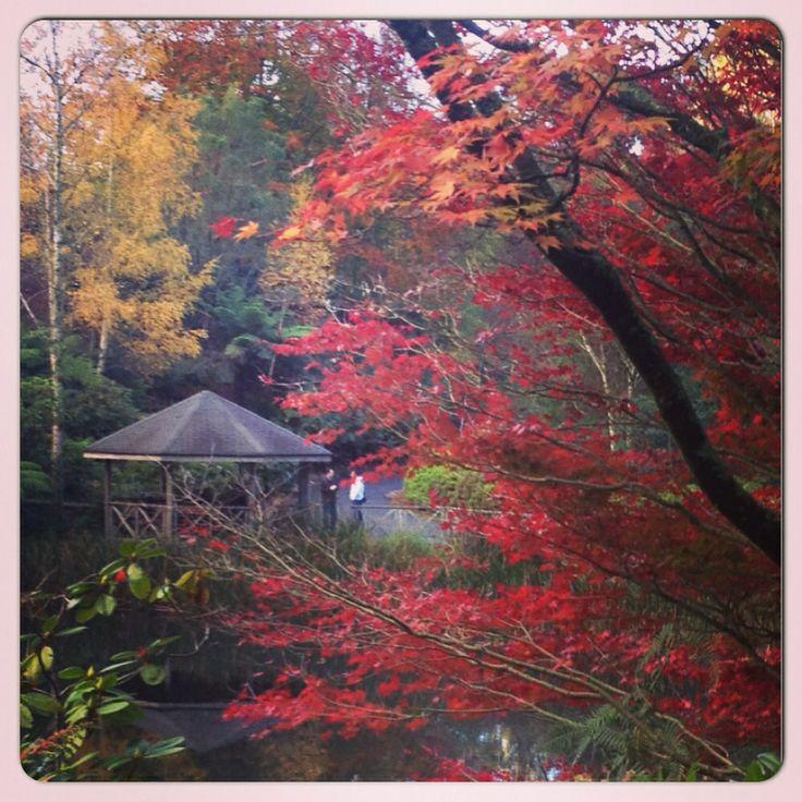 Loving this walk at Mount Dandenong Botanical Garden