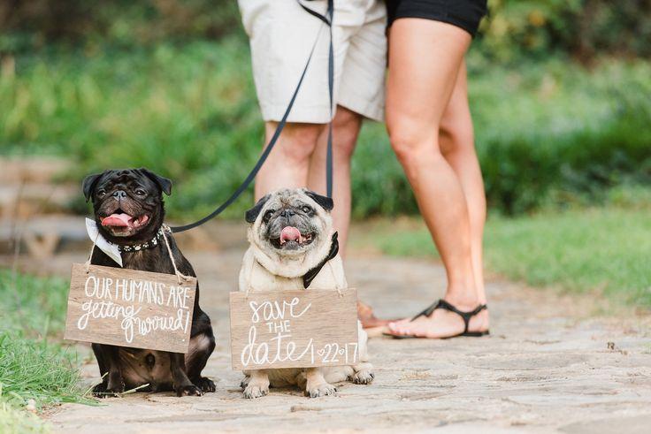 Southern Savvy Events | Gracie & Brandon | Engagement Photos | E Shoot | Furballs | Pugs | Pugs & Bowties | Pug Portrait | Wedding Signs | Pug Wedding | Dog Lovers | Save The Date | Dog Save The Date | Wedding Details