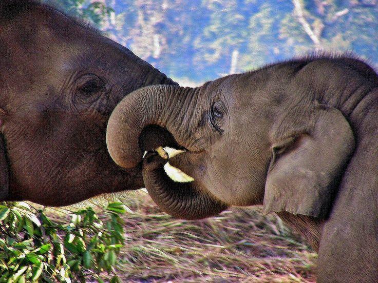 die besten 25 elefanten aufzuchtstation ideen auf pinterest kindergarten f r babyelefanten. Black Bedroom Furniture Sets. Home Design Ideas