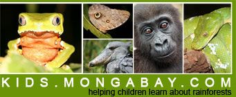 Monkey frog in Peru, Owl butterfly in the Amazon, Shoebill in Uganda, infant lowland gorilla in gabon, green python in Borneo