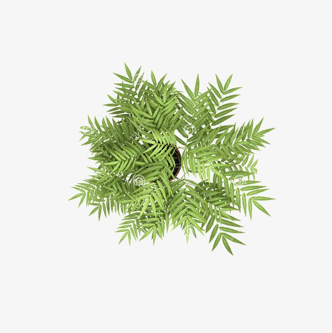Overlooking Overlooking The Top View Poster Design Shading Png Transparent Image And Clipart For Free Download Tree Photoshop Trees Top View Photoshop Illustration