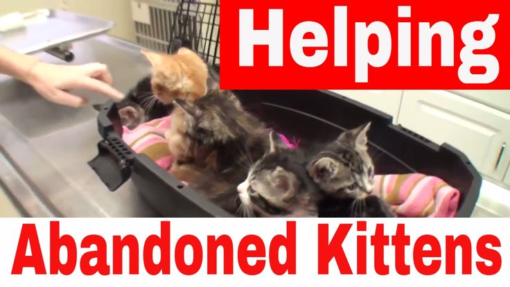 Helping Abandoned, Stray Cats and Kittens - Cats At Vet