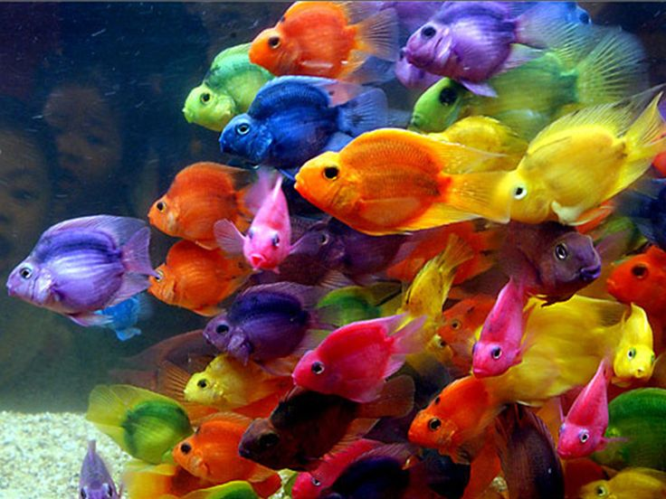 73 best African cichlids images on Pinterest African cichlids