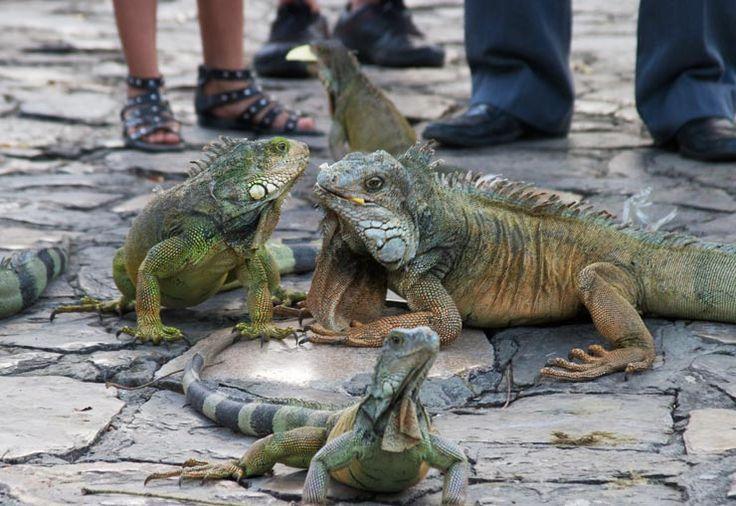 Équateur: top de Guayaquil -Parque las Iguanas
