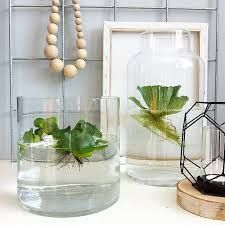 Afbeeldingsresultaat voor indoor waterplant