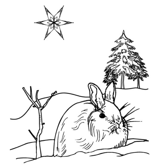 winter animal coloring pages - photo#27