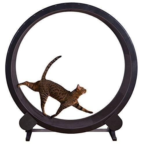 One Fast Cat Exercise Wheel - Black #OneFastCat