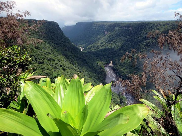 A view of the Potaro River below Kaieteur Falls in central Guyana. Over the centuries the raging waters have cut a deep gorge into the sandstone conglomerate tableland.