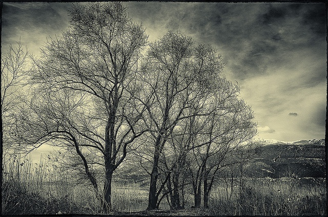 trees by kyramas, via Flickr