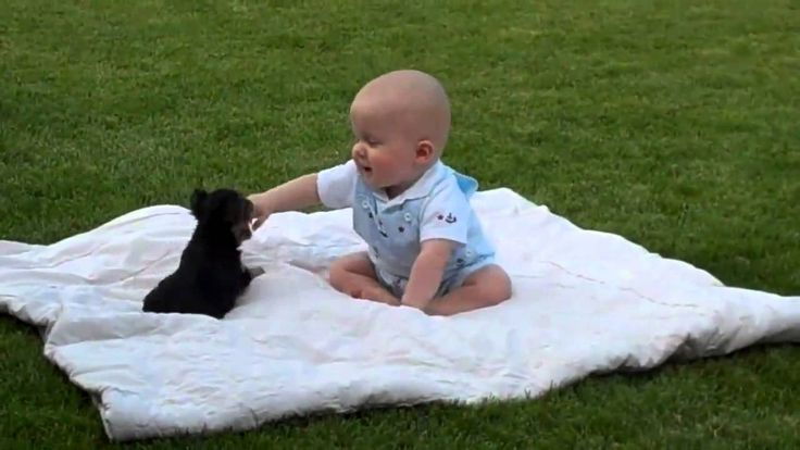 Adorable Puppy Attacks Baby