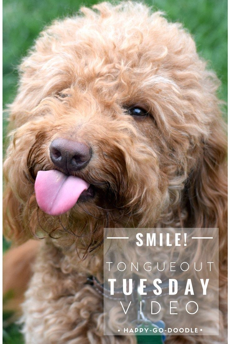 Smile It S Tot Enjoy A Little Puppy Pick Me Up From A Silly Dog