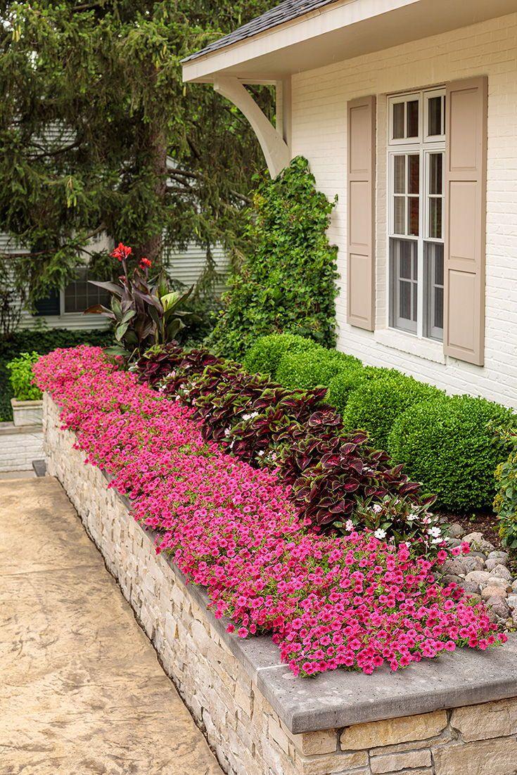 Hot Pink Petunias For Garden Beds Beyond In 2020 Fall Landscaping Fall Landscaping Front Yard Front Flower Beds