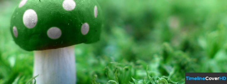 Green Mushroom Wide Facebook Timeline Cover Hd 851x315 Covers