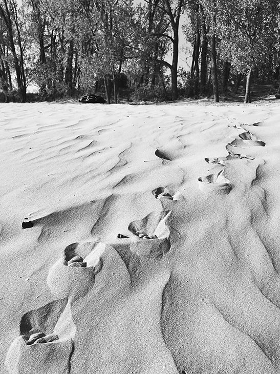 Paw prints in the sand at Sandbanks Provincial Park.