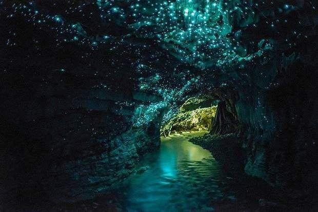 Une grotte luminescente en Nouvelle-Zélande-La Waitomo Glowworm Caves est une grotte dont le plafond est tapissé de vers luisants gros comme des moustiques. Ils appartiennent à l'espèce