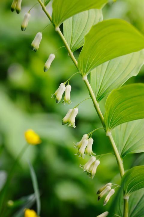 121 besten Schattengarten Bilder auf Pinterest Mein garten