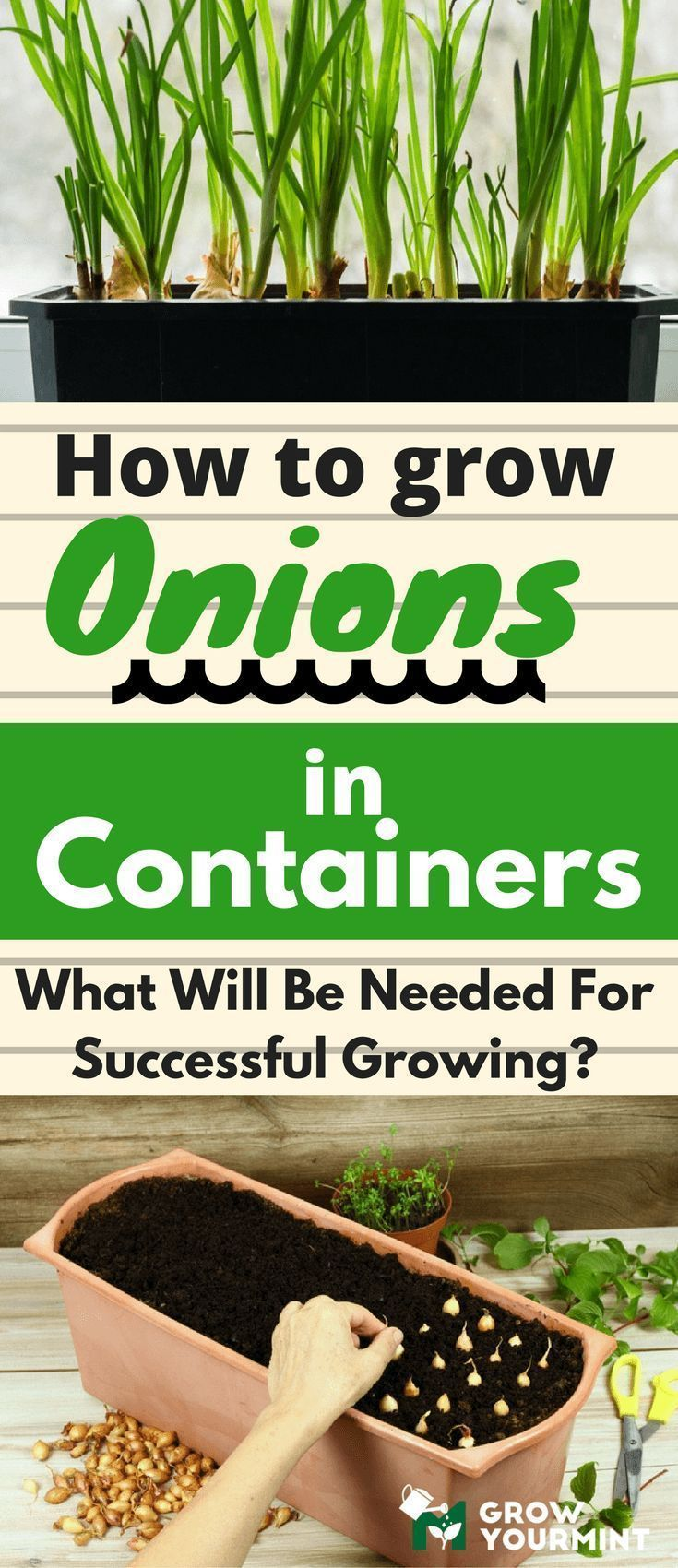 How to grow onions in containers #onion#container#growyourmint #howtourbangarden