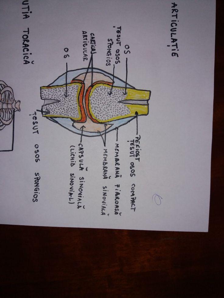 #biology #anatomy
