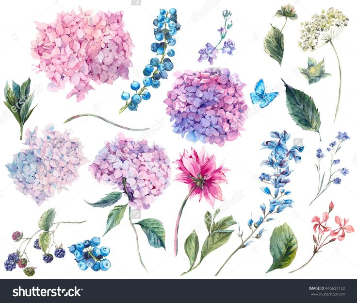 https://image.shutterstock.com/z/stock-photo-set-vintage-watercolor-elements-of-blooming-hydrangea-and-garden-flowers-leaves-branches-flowers-445631122.jpg
