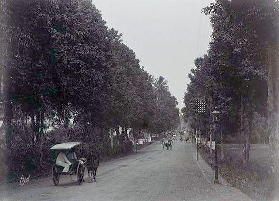 Pemandangan Jalan Di Bogor Jawa Barat Sekitar 1900 Pemandangan Indonesia Dunia